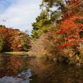 長谷池の紅葉_09