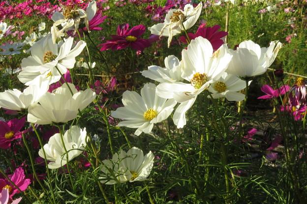 布引ハーブ園 四季の庭_02