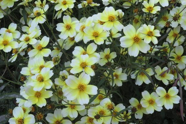 布引ハーブ園 四季の庭_03