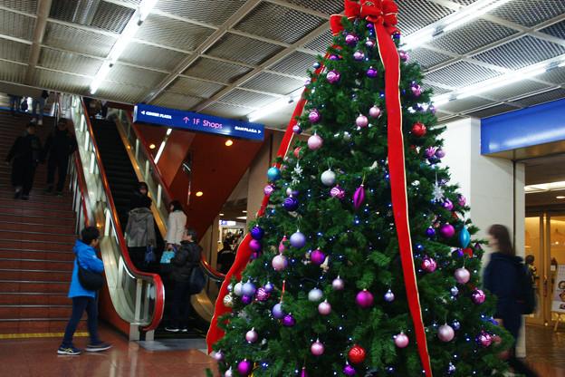 サンチカのクリスマスツリー
