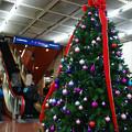 Photos: サンチカのクリスマスツリー