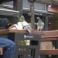 Photos: モザイクの鳩たち_02