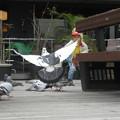 Photos: モザイクの鳩たち_03