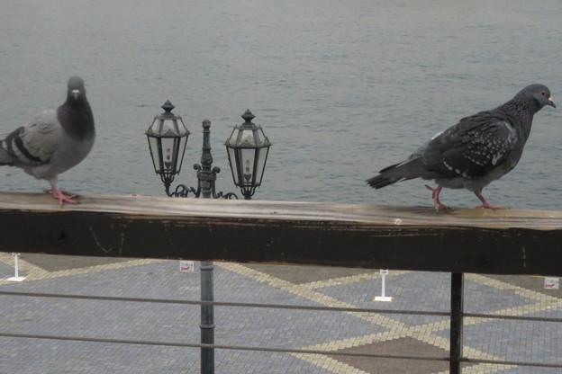 Photos: モザイクの鳩たち_04