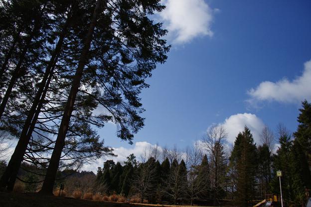 シアトルの森