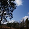 Photos: シアトルの森