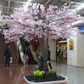 Photos: さんちかで桜爛漫_01