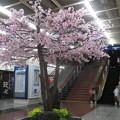Photos: さんちかで桜爛漫_02
