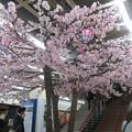 Photos: さんちかで桜爛漫_03