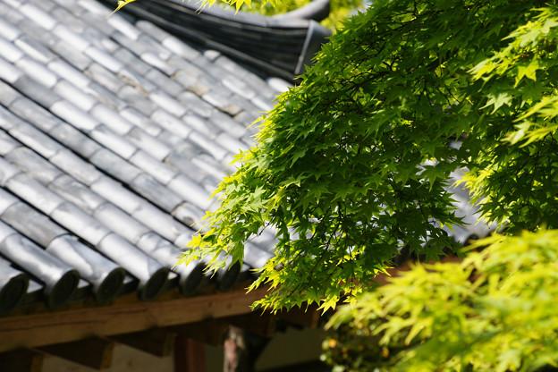 屋島寺 宝物館からの眺め