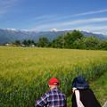 Photos: 大麦と北アルプス_02