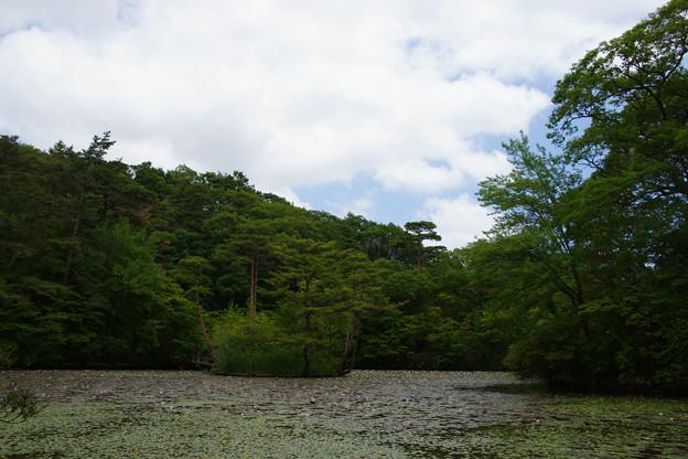 初夏の長谷池_03