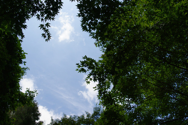 森林植物園 初夏の青空