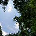 Photos: 森林植物園 初夏の青空