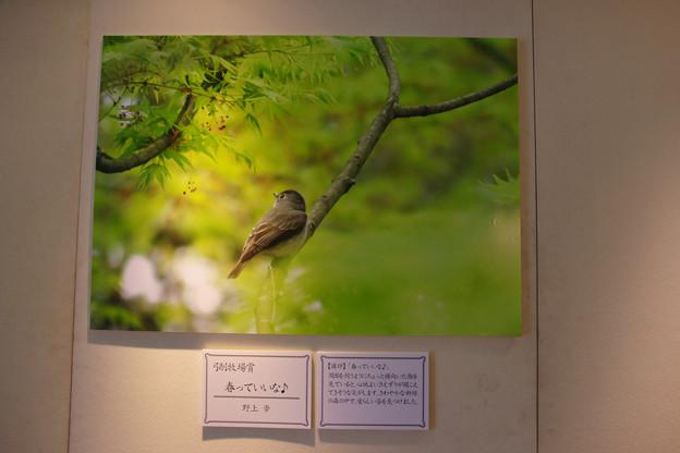 Photos: フォトコンテスト入賞作品 弓削牧場賞