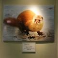Photos: フォトコンテスト 人気賞2位