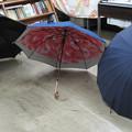 Photos: 傘の花_01