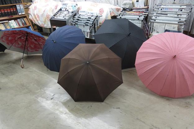 傘の花_02
