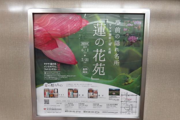 蓮の花苑_01