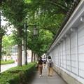 Photos: 湊川神社の緑_01