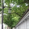 Photos: 湊川神社の緑_02