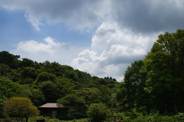高山植物園 夏の空