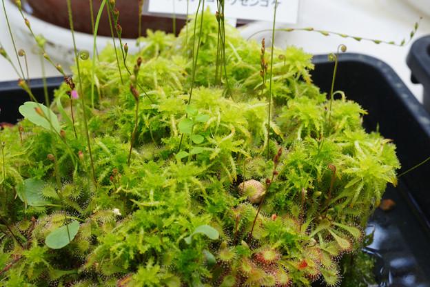 食中植物_02