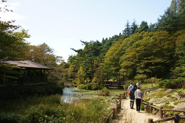 六甲高山植物園 青空_02
