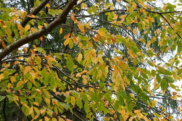 森林植物園の紅葉_03