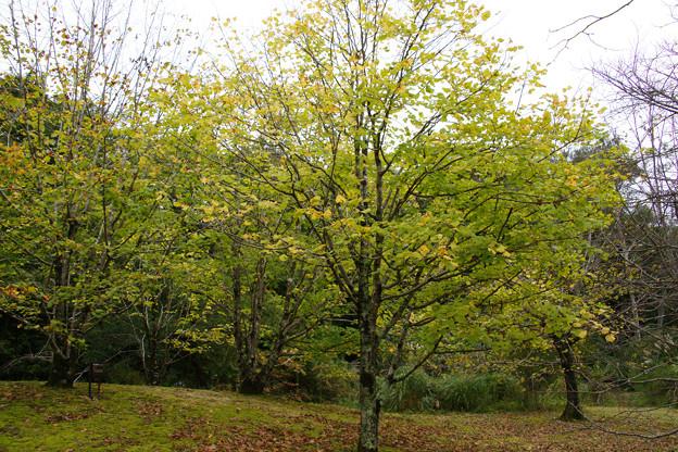 リガの森の紅葉