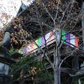 Photos: 長谷寺 登廊から本堂