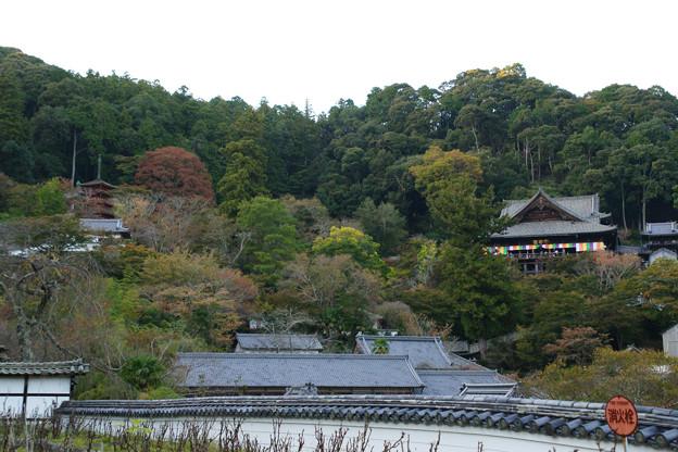 長谷寺 本堂と五重塔を臨む