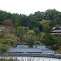Photos: 長谷寺 本堂と五重塔を臨む