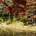 湖畔の紅葉_04