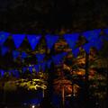 Photos: 広場のライトアップ_03