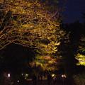 Photos: モミジのライトアップ_01