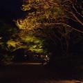 Photos: モミジのライトアップ_03