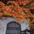 高源寺 仏殿の紅葉_01