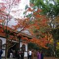 高源寺 仏殿の紅葉_03