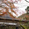 Photos: 高源寺 方丈の紅葉_02