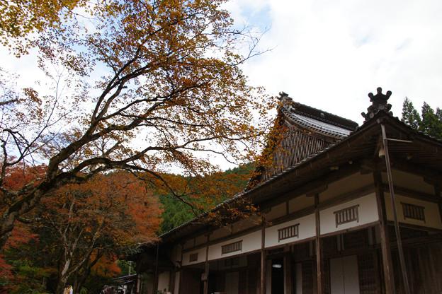 Photos: 高源寺 方丈の紅葉_04