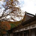 高源寺 方丈の紅葉_04