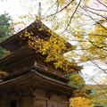 Photos: 高源寺 多宝塔の紅葉_01