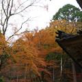 Photos: 高源寺 多宝塔の紅葉_02