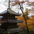 Photos: 高源寺 多宝塔の紅葉_05