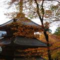 Photos: 高源寺 多宝塔の紅葉_06