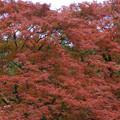 高源寺 丹丘荘の紅葉