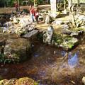 高源寺 心宇の池