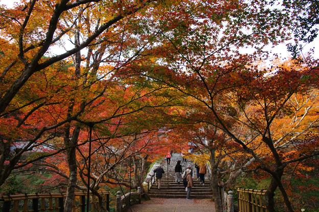 Photos: 円通寺 境内の紅葉_01