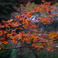 Photos: 円通寺 境内の紅葉_02